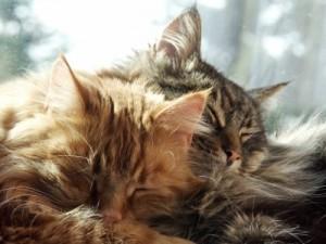 Am schönsten ist es zu zweit. Schenk deiner Katze einen Freund!